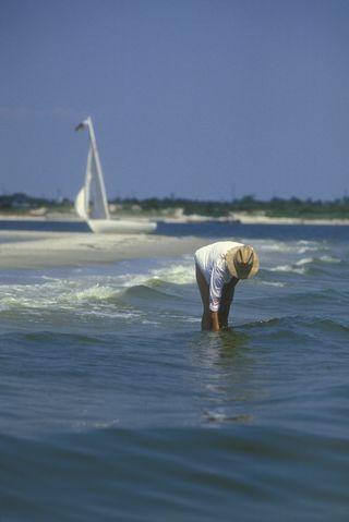 Beachcomber (16340467)