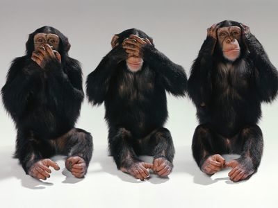 See-no-evil-hear-no-evil-speak-no-evil-monkeys-14750406-1600-1200